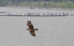 OSPREY AT KINGSMILL MARINA